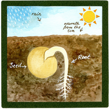 All-about-roots-E